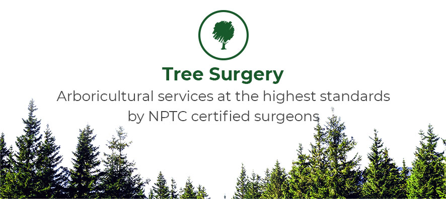 Tree surgery. Arboricultural services at the highest standards by NPTC certified surgeons.